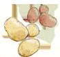 diverse kleuren aardappel