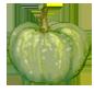 pompoen groen